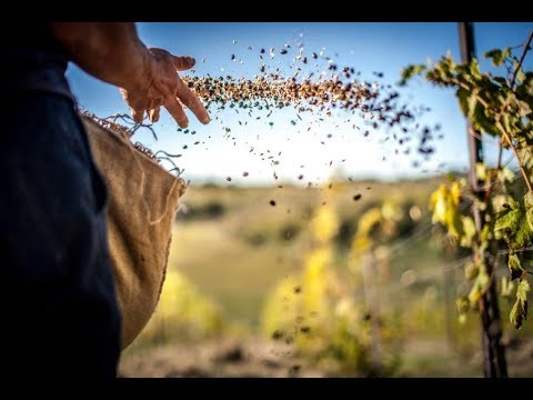 Посев (Каждый день выбираем) Христианское караоке