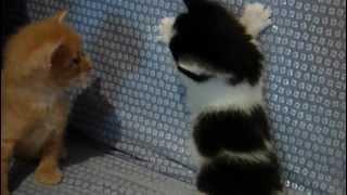 crno bijeli macic.MOV