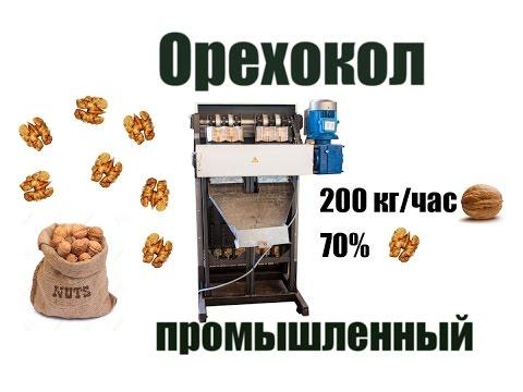 Масло грецкого ореха — польза, цена, рецепты, купить на сайте