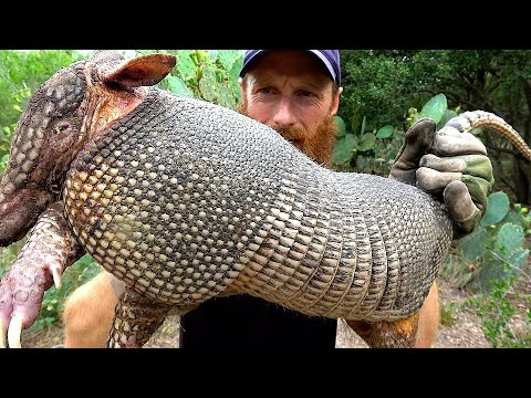 ARMADILLO Hunt With CATCH NET, Foraging The Wild For Tree-Berries | ASMR (Silent)