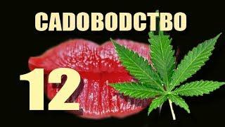 Масло марихуаны. Декарбоксилирование. Садоводство # 12