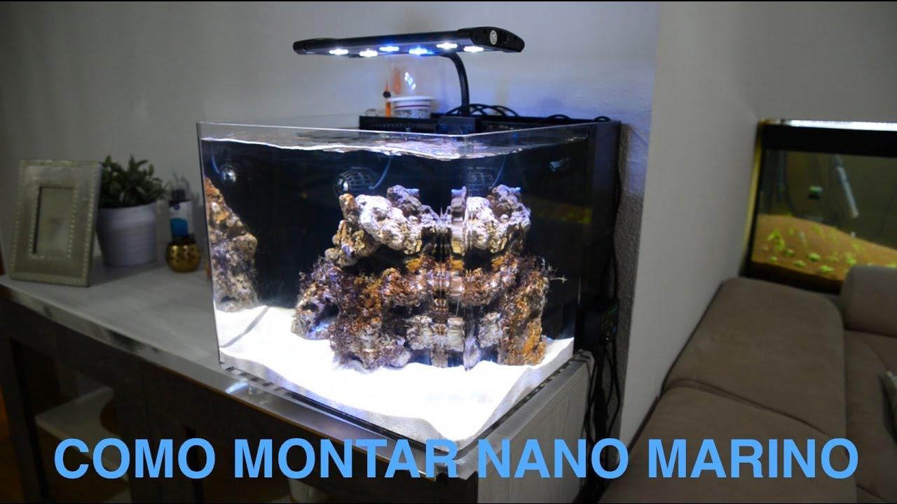 C mo montar nano acuario marino aquarium centrofama for Peces marinos para acuarios pequenos