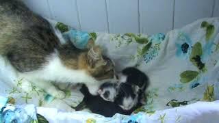 Кошка хочет перенести котят.