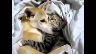 cat are the best friends we can have