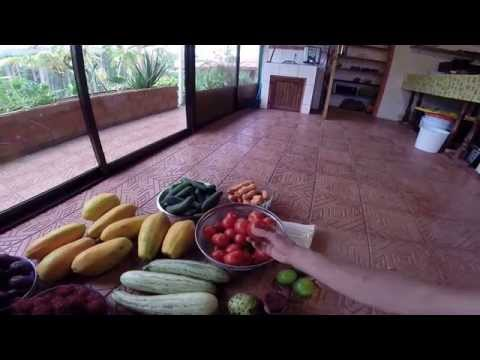 San Isidro Costa Rica Farmers Market Fruit Haul