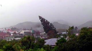 kasırga büyük ağaçları yerinden söktü bbc türkçe