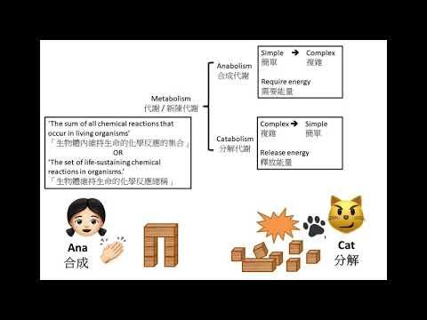 [搞清搞楚][安娜與貓記憶法] DSE Bio 分解代謝VS合成代謝 Metabolism: Catabolism VS Anabolism