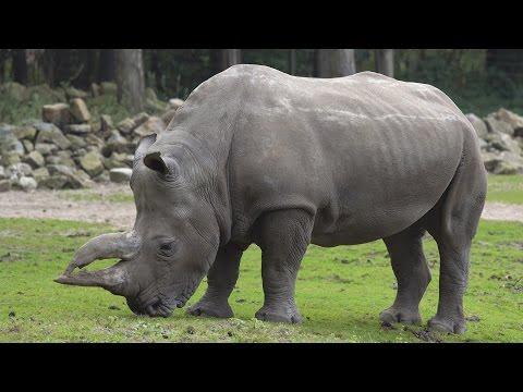 Burgers' Zoo Arnhem in 4k! | Sony a6300