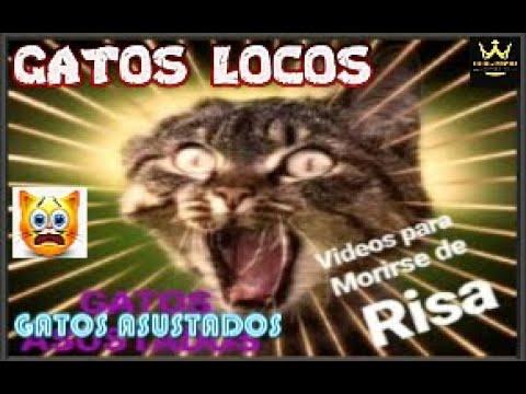 los ultimos videos mas comicos de Gatos para morirse de la risa surper graciosos y asustados