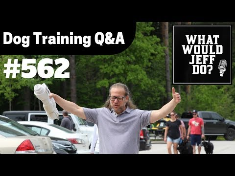 dog-training---training-puppies---fearful-dog-training---what-would-jeff-do?-q&a-ep.562-(2019)