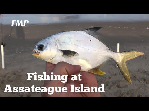 Fishing Assateague Island