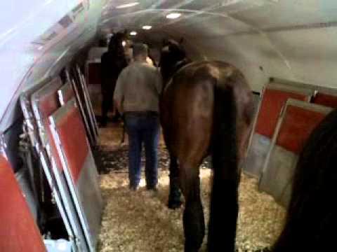 Transporte de caballos para los JUEGOS PANAMERICANOS 11  YouTube