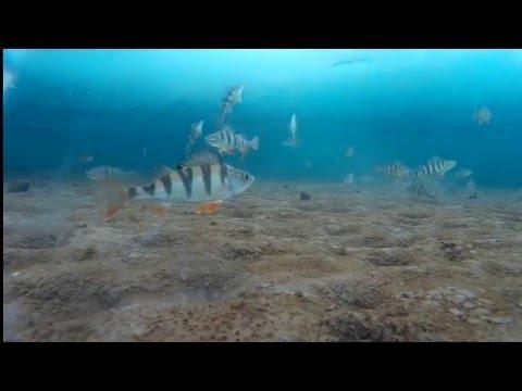 подводная рыбалка в братске