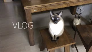 자취생 브이로그 | 노브랜드 장보기 | 친구 고양이와 …