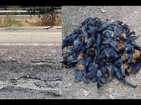 Heat wave melts streets and makes bats fall from the sky in Australia 2018