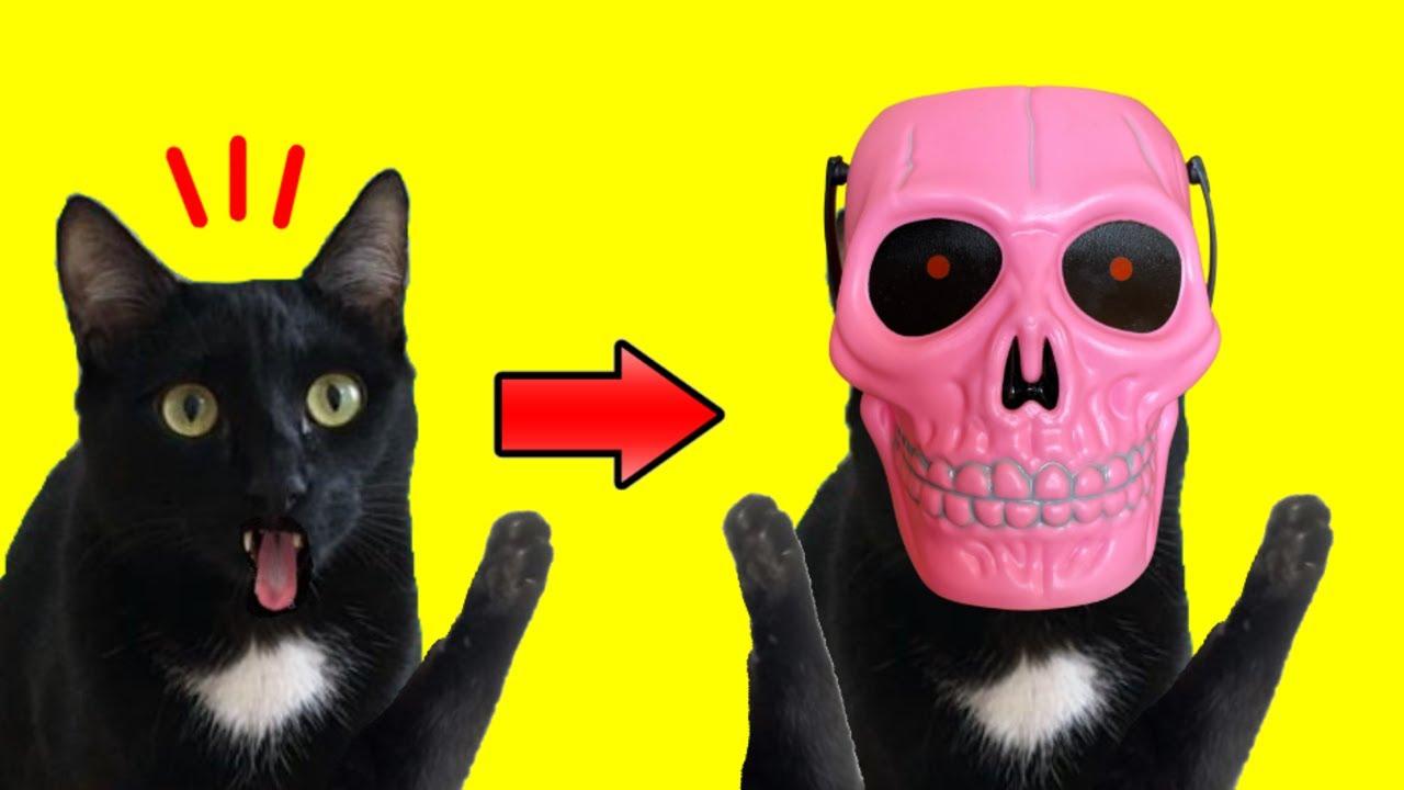Gato vs calavera de Halloween #shorts de gatos Luna y Estrella / Videos #cortos chistosos