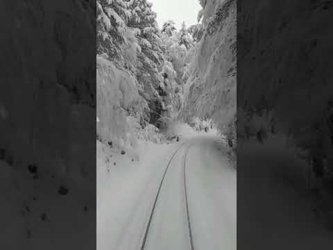 Train Travels Through Winter Wonderland In Corsica, France