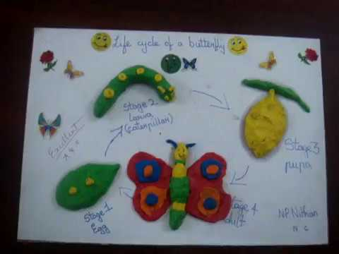 Life Cycle Of A Butterfly Grade 4 Activity Youtube