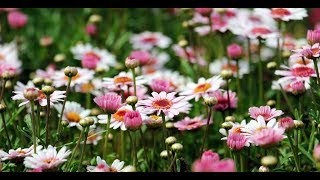 Beautiful Relaxing Piano Music - Soothing Instumental