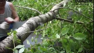 Дождь и сильный ветер повалили деревья в Комсомольске