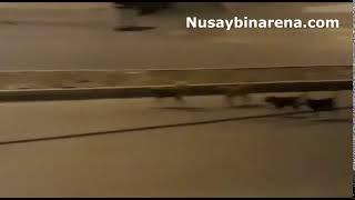 Nusaybin'de köpek sürüleri korku salıyor!