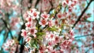 เพลง ดอกไม้คุณธรรม ( manarinch )