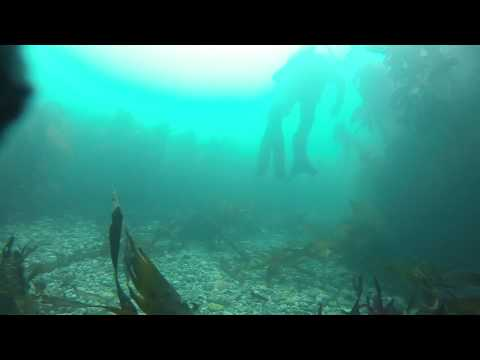 Diving at Silver Steps 2015