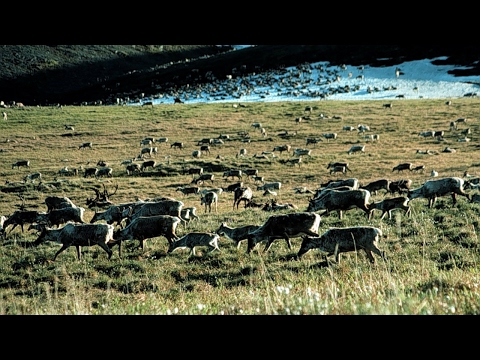 Senate votes to repeal hunting law in Alaska
