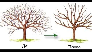 видео Обрезка плодовых деревьев летом