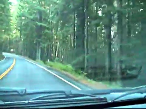 Giant Redwood forest and dash-cam