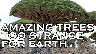 Top Ten Amazing Trees by Toptenz.net