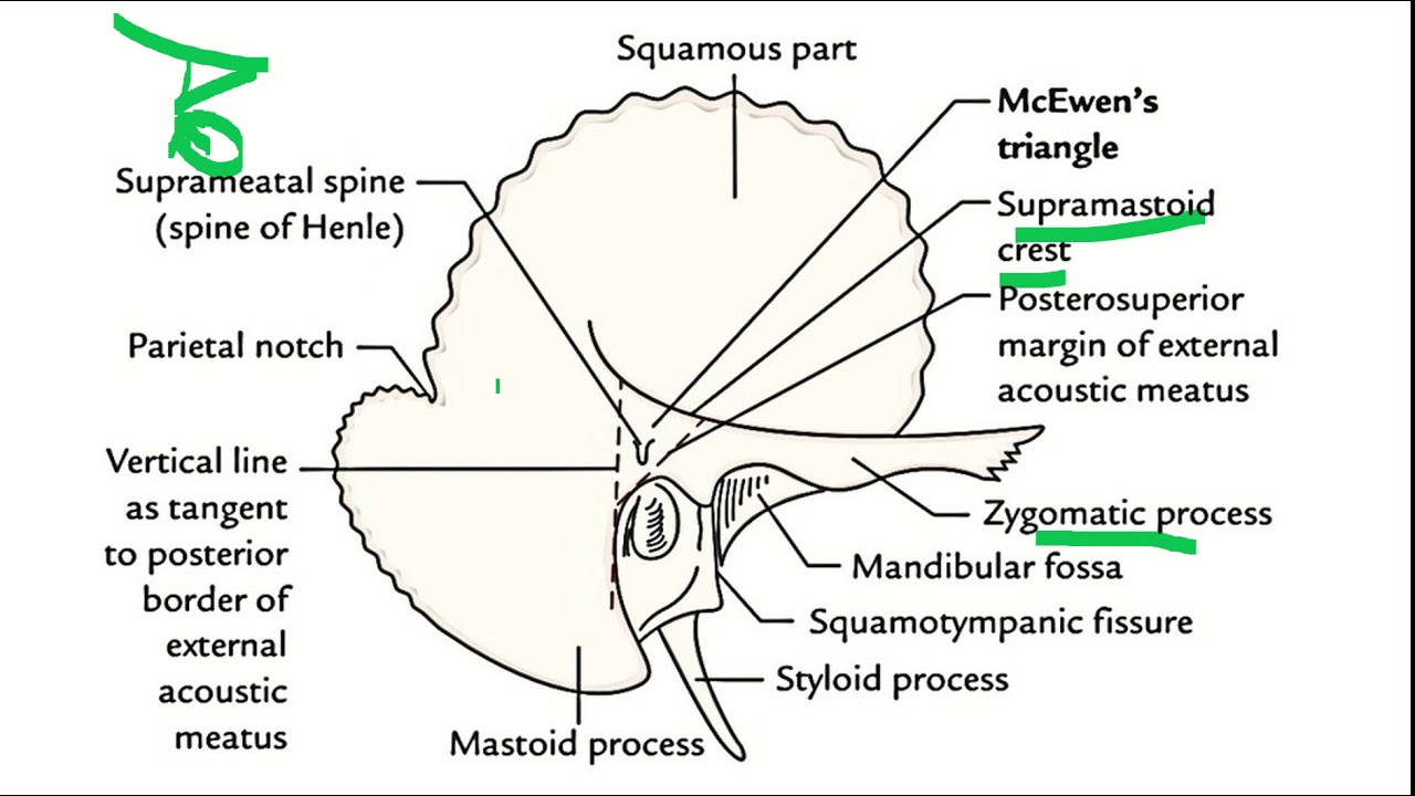 small resolution of anatomy of middle ear 2 ent mastoid antrum