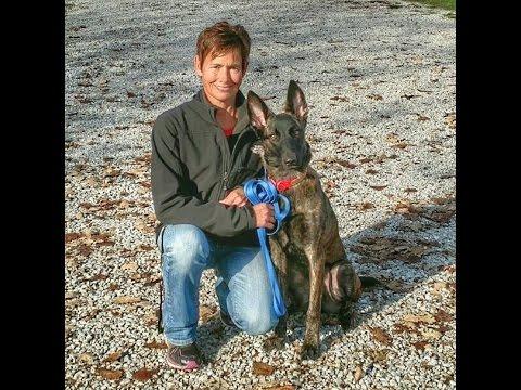 ava-dutch-shepherd---dog-training-omaha,-lincoln-nebraska