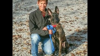 Ava Dutch Shepherd - Dog Training Omaha, Lincoln Nebraska
