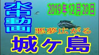 水中動画(2019年12月20日)in 城ヶ島(漁港・岸壁側)