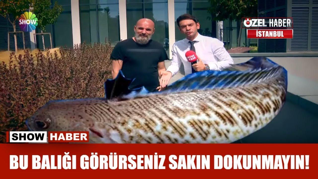 Bu balığı görürseniz sakın dokunmayın!