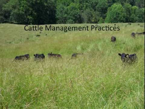 How I have Extended My Grazing Season