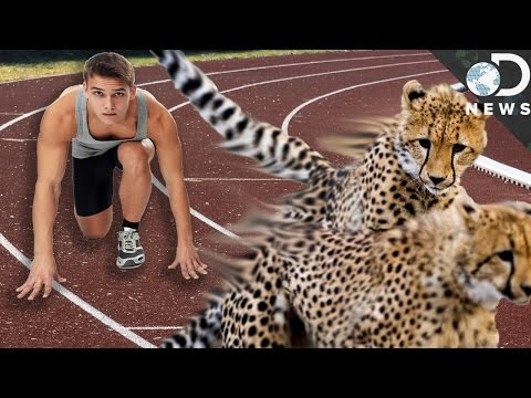 Why Are Humans Slower Than Most Animals?