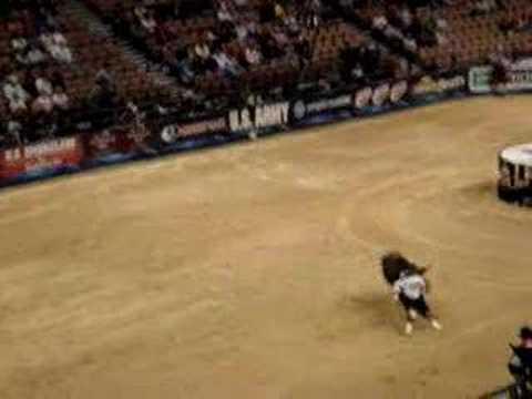 bull fighting in las vegas