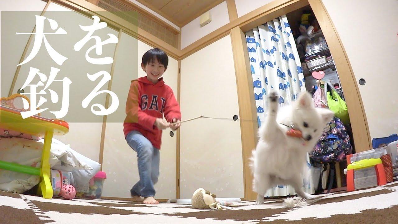 猫のように遊ぶ子犬!ぽこあぽこ