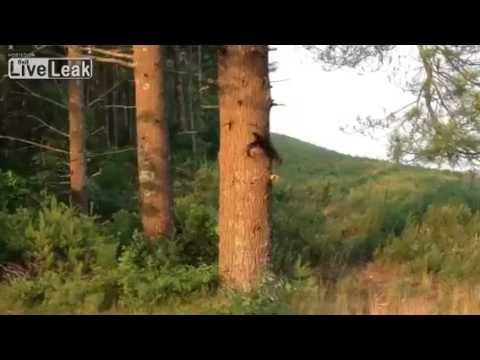Fisher cat vs squirrel