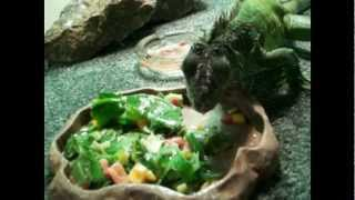 How to Feed and Hydrate Your Iguana