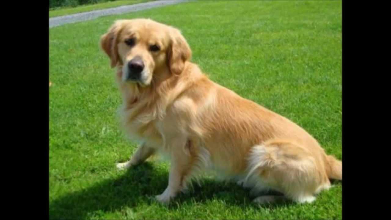 top 10 s u00fc u00dfesten hunde  cutest dogs