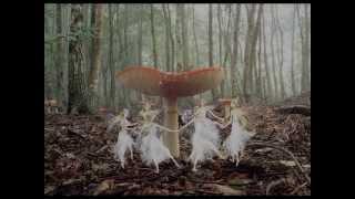 Petra Kwekkeboom & Phons Bakx - «Elfendans»
