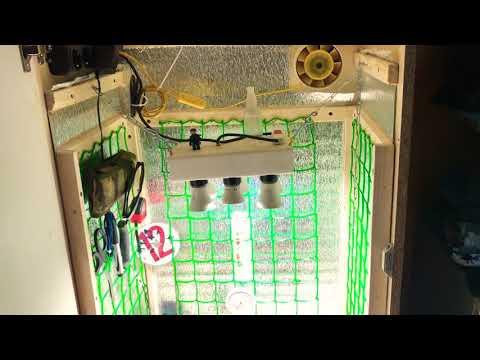 Гроубокс «Стелс» Выращивание Марихуаны ,11 день от каски !)