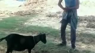 DVD wap Nahi Dekha Hoon kripya Karke video