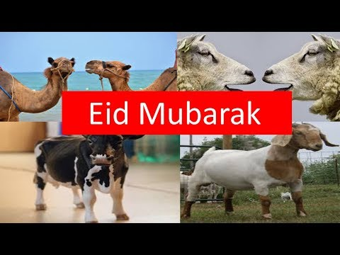 Eid Greetings Eid ul Azha Mubarak bakra eid mubarak from Birds Fantasy