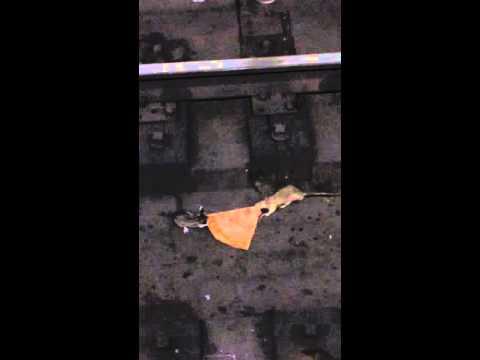 Pizza Rat 2 | The Last Slice