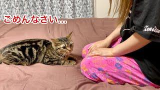 寝室で悪さをし過ぎて飼い主に激しい説教をされてしまった猫w