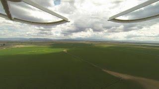alfalfa storm